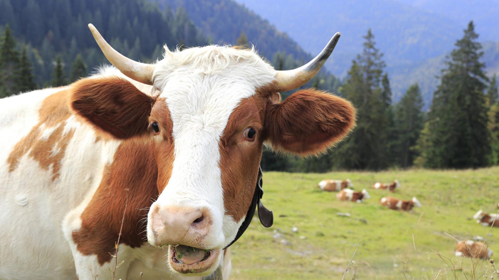 Home - Happy Cow